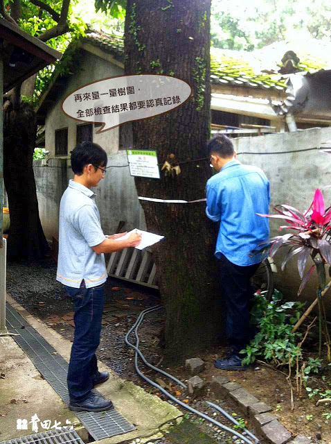 青田七六-樹木健診-楓香測量
