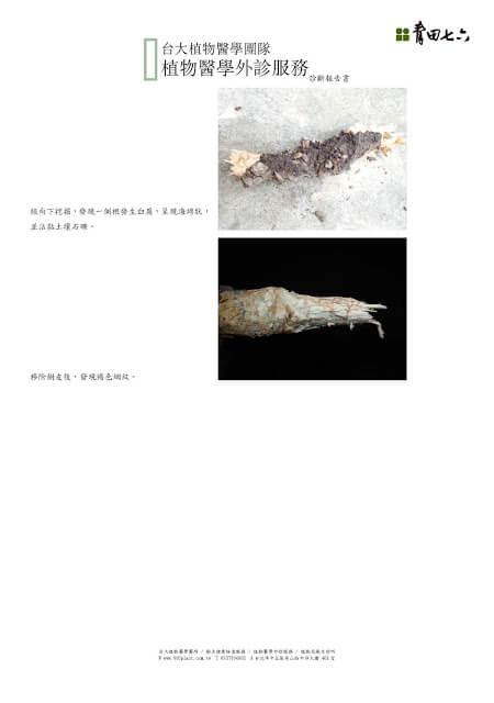 植物醫學外診服務_結果報告書_青田七六0825_頁面_3-blog
