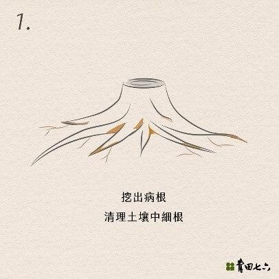 青田七六-維修紀錄-20180604(樹木褐根病防治工作)